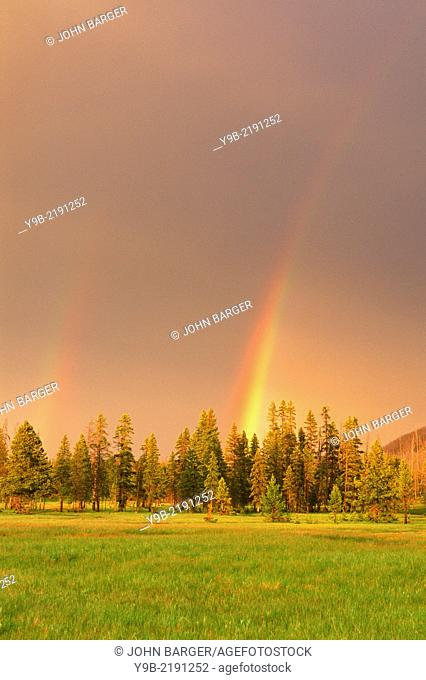 Rainbow over conifers and meadow, near Firehole River, Yellowstone National Park, Wyoming, USA