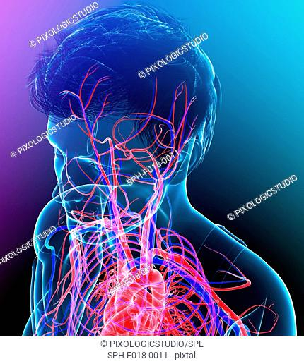Illustration of male head and chest blood vessels