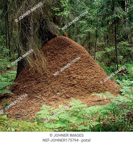 Pile of mud in forest