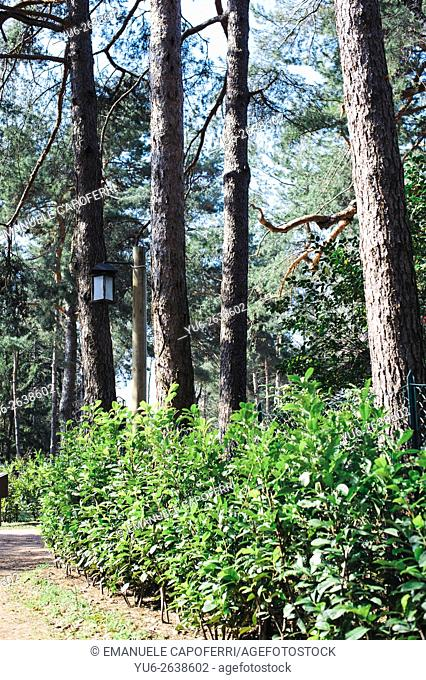 Avenue of access to the villa in the woods