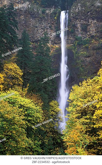 Multnomah Falls with trees in Fall color, Columbia River Gorge National Scenic Area, Oregon