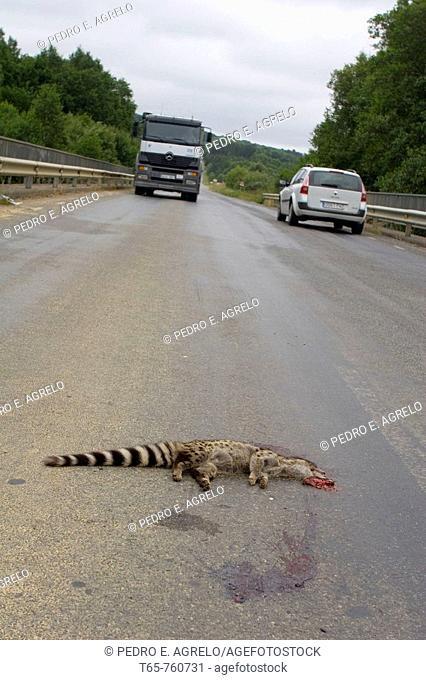dead animals on roads