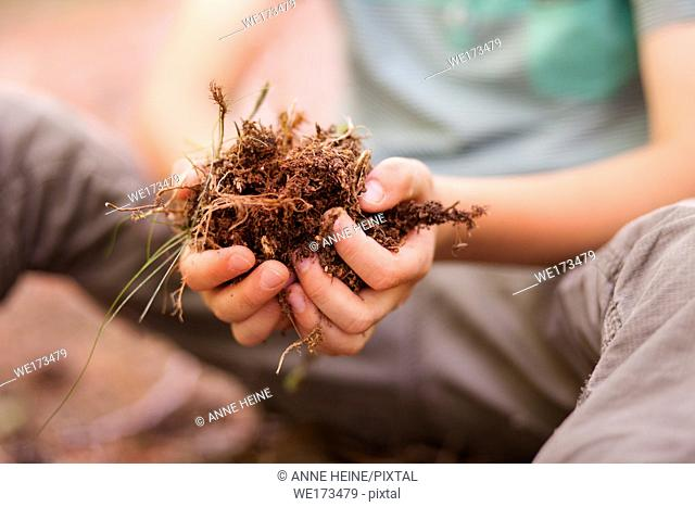 Young boy holding forest topsoil in both hands. Warstein, Arnsberger Wald, Sauerland, Germany