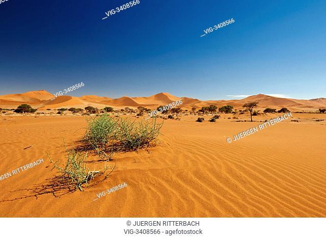 desert Landscape of Namib at Sossusvlei, Namib-Naukluft National Park, Namibia, Africa - Namib-Naukluft National Park, Namibia, 21/02/2011