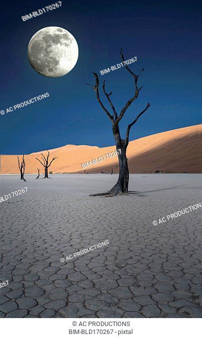 Dead trees and sand dunes in remote desert landscape