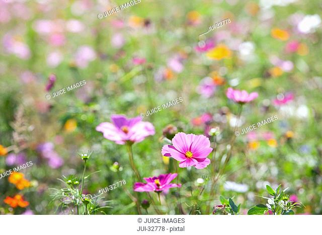 Pink blooming flowers in field of wildflowers