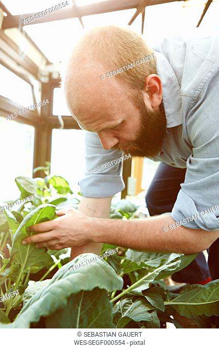 Young man working in green house