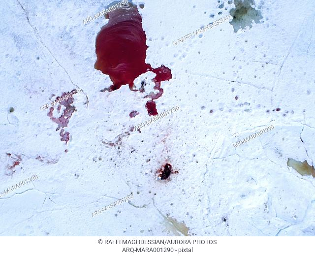 View from above of blood on snow left after animals hunting, Spitsbergen, Svalbard and Jan Mayen, Norway