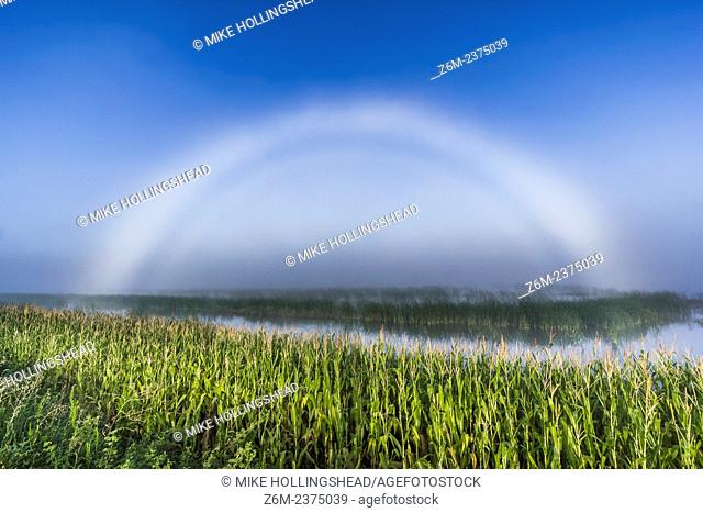 Fogbow forms over flooded fields. Field flooding due to the historic 2011 Missouri River Flood
