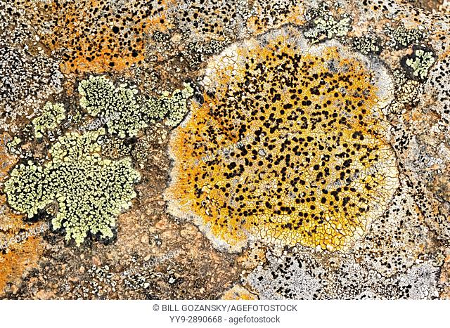 Colorful lichen on rocks - Tablelands, Gros Morne National Park, near Woody Point, Newfoundland, Canada