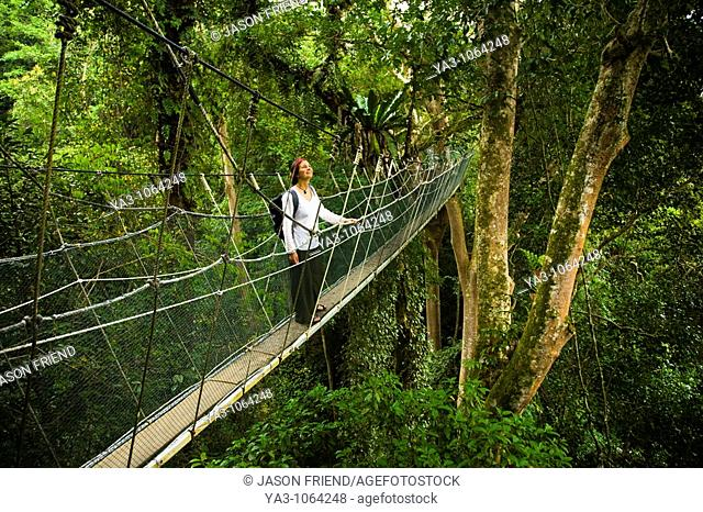 Sabah Malaysia, Borneo, Kinabalu National Park  Tourist walking the jungle canopy walkway at Poring Hot Springs