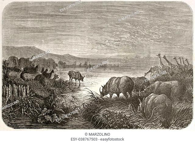 old illustration of watering at African sunset. Created by Dore after Anderson, published on Le Tour du Monde, Paris, 1860