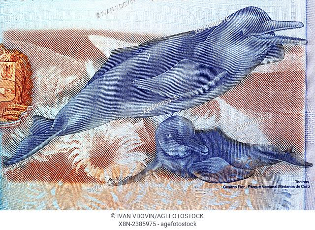 Pink Amazon River Dolphins, Inia geoffrensis from 2 Bolivares banknote, Venezuela, 2008