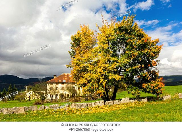 Altopiano of Asiago, Province of Vicenza, Veneto, Italy. Typical house with beech tree during autumn