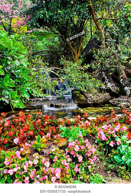 Flowers and waterfall in the garden