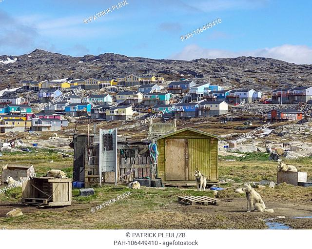 22.06.2018, Gronland, Denmark: Sled dogs have their camp a bit off the residential buildings of the coastal town of Ilulissat in western Greenland