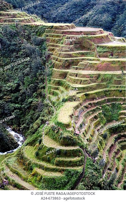 Nov. 2007. Philippines. Luzon Island. The Cordillera. Banaue District. Rice terraces (W.H.)