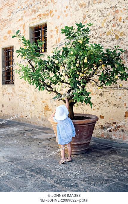 Girl reaching lemon on lemon tree