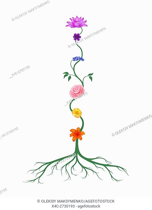 Chakra symbols represented as associated with chakras flowers and colors growing from a root chakra isolated illustration on white background