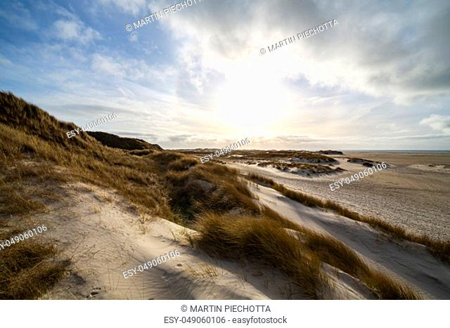 Hardy marram grass on coastal sand dunes backlit by an atmospheric blue cloudy sky on the Island of Amram, North Frisia, Germany