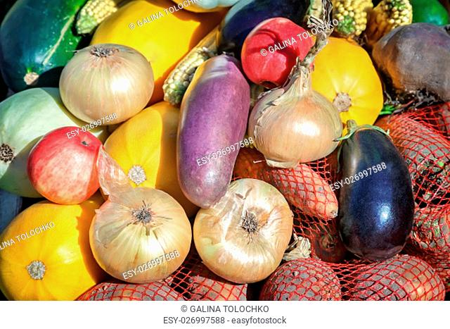 A variety of vegetables: onions, carrots, potatoes, pumpkins, squash, corn, apples offered for sale at the fair