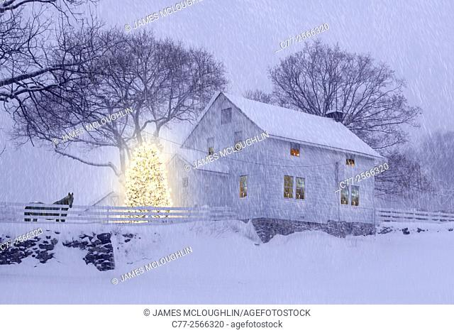 Horse, Horses, winter, snow, farm house, Christmas Tree, Christmas