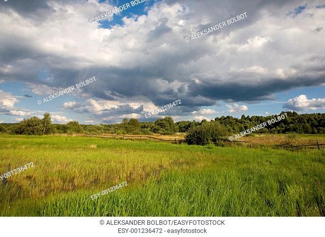 Abandoned natural meadows under summertime cloudy sky near Bialowieza Forest, Poland, Podlasie Province