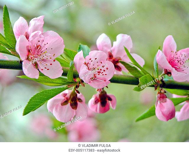 spring tenderness