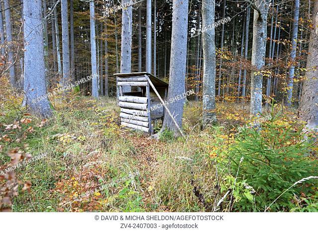 A perch in a mixed forest in autumn, Austria