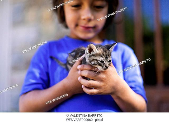 Hands of little boy holding tabby kitten