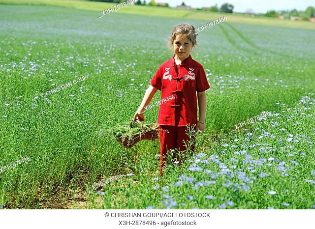 little girl dressed in red in a flax field flowering, Centre-Val de Loire region, France, Europe