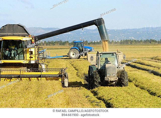 Rice harvest. Delta del Ebro. Tarragona. Baix Ebre. Catalunya. Spain