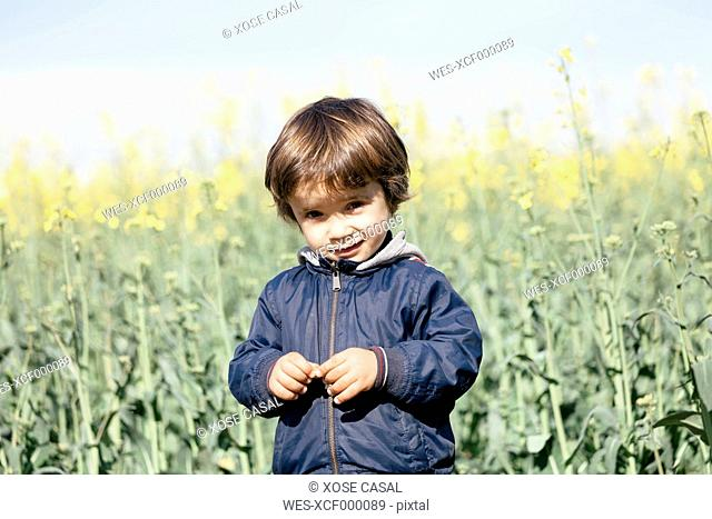 Portrait of little boy standing in front of rape field