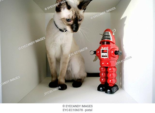 Cat looking at robot