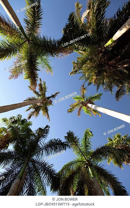 Egypt, Aswan, Kitchener Island. An avenue of palm trees in the botanical gardens on Kitchener Island