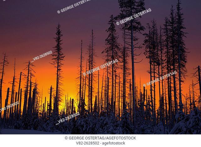 Sunrise through B&B Complex Fire zone, Santiam Pass-McKenzie Pass National Scenic Byway, Willamette National Forest, Oregon