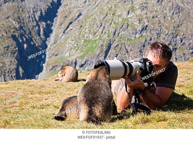 Austria, Grossglockner, Man taking photograph of Alpine Marmots Marmota marmota