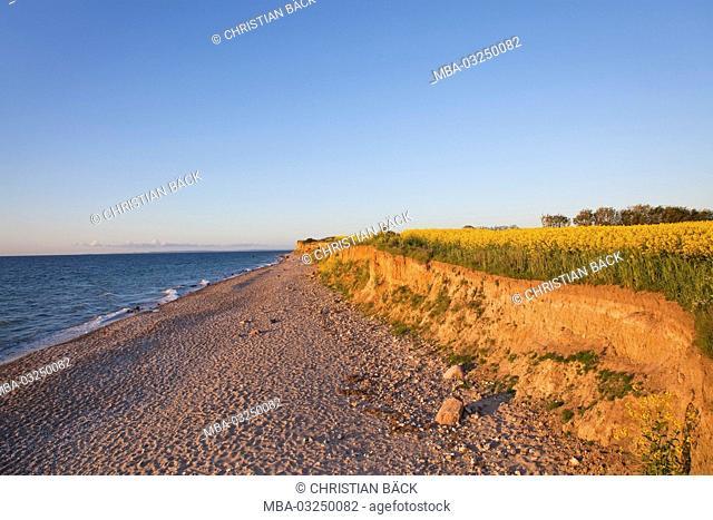 Rape field in the steep coast near Schönhagen, Schleswig - Holstein, North Germany, Germany