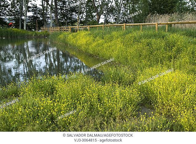 spring landscape, location banyoles, Girona, Catalonia, Spain