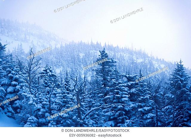 Snow covered trees on Mt. Mansfield, Stowe, Vermont, USA