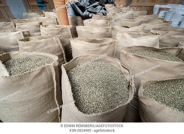 Green, unroasted coffee beans are piled in burlap sacks and await distribution at a coffee processing plant in Aquires, Costa Rica