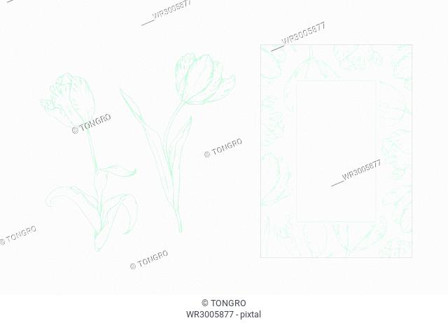 Pen drawings of tulips and frame