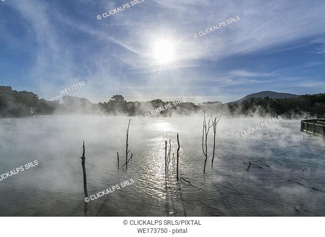 Trees growing in hot springs and the sun covered by the steam. Kuirau Park, Rotorua, Bay of Plenty region, North Island, New Zealand