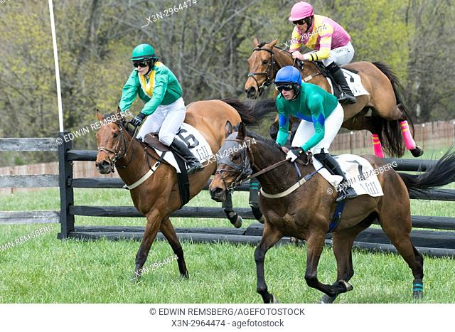 A hurdle is gracefully traversed by race horses at the Manor Races Monkton Maryland USA