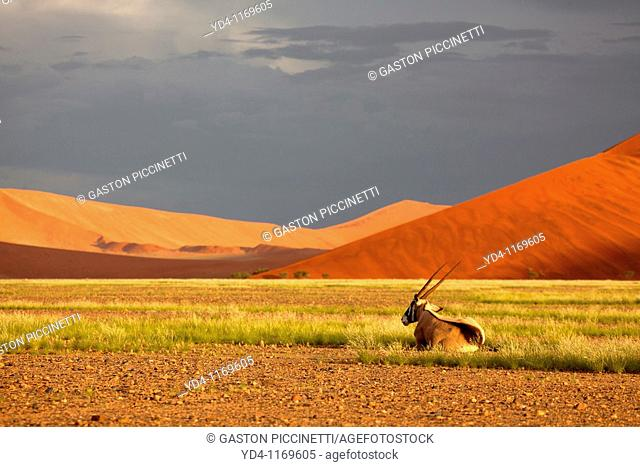 Beautiful colours in the desert in rainy season, Namib-Naukluft National Park, Namib desert, Namibia