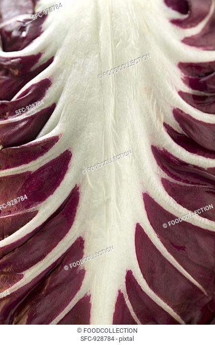 Radicchio leaf detail