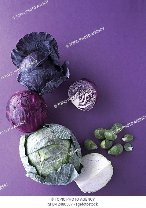 Red Cabbage, Cabbage, Brussels Sprout