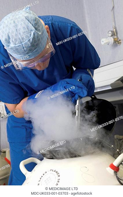 A doctor removing embryo samples from cryogenic storage. Fertilised embryos are stored in liquid nitrogen filled tanks to keep them 'as new' if patients require...