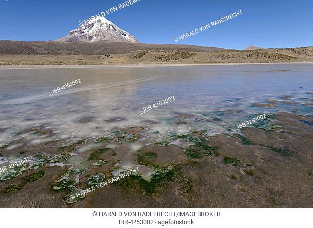Sajama Volcano and frozen lake on Rio Sajama, Sajama National Park, Oruro, border between Bolivia and Chile