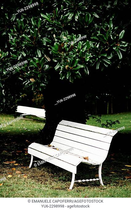White bench under a magnolia